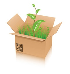 open recycle shipping box with green plant vector image