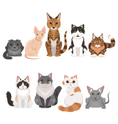 set of many different kittens vector image