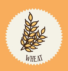 Wheat design vector