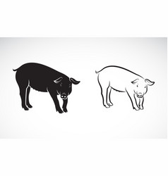 pig on white background farm animals vector image