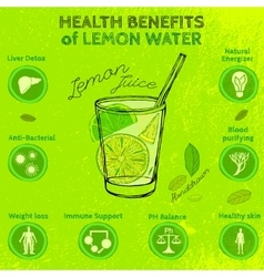Handdrawn Lemon Infographic vector image