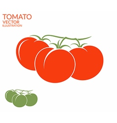 Tomato Branch vector image vector image