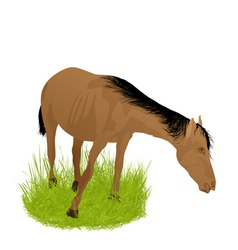 Horse in the grass vector
