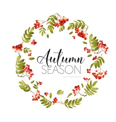 Autumn Rowan Berry Background Floral Banner Design vector image vector image