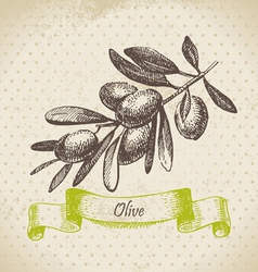 Olive Hand drawn vector image