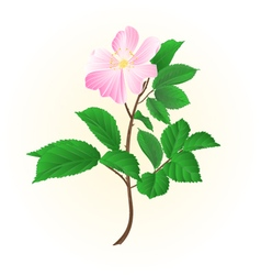 Twig wild rose leaves and flower vector image vector image