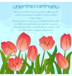 Floral card with tulips on blue background vector