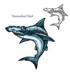 Hammerhead shark fish isolated sketch icon vector