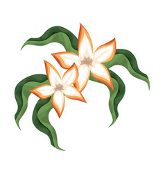 tropical flower leaves nature vector image vector image