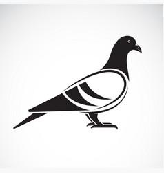 pigeon design on white background bird vector image