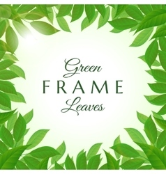 Fresh green leaves frame vector