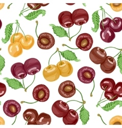 Seamless pattern with cherries on white background vector
