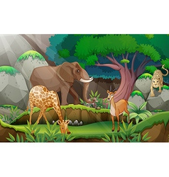Animals and jungle vector image