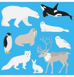 Arctic animals collection three vector