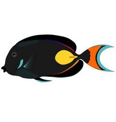 Butterfly black fish vector