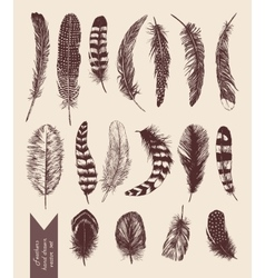 Hand drawn vintage set with feathers vector image