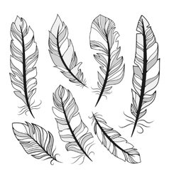silhouettes feathers vector image