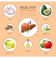 Healthy foods for liver medical health vector