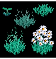Growth stages of white chamomile five items vector