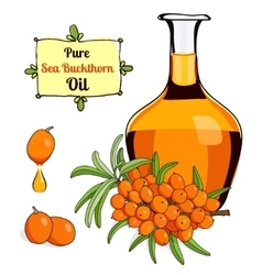 Colorful of sea buckthorn oil 2 vector
