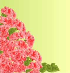 Flowering shrub pink hibiscus floral background vector