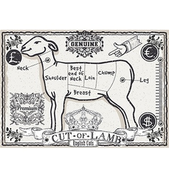 Cut of lamb on vintage page vector