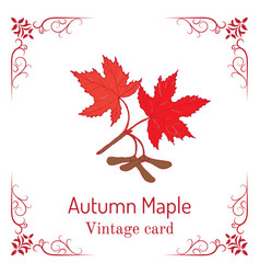 autumn maple branch with leaves and seeds vintage vector image