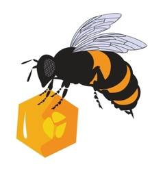 Bees and honeycomb vector