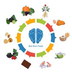 Brain foods infographics brain foods infographics vector