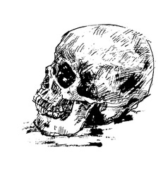 Drawing human skull on white vector image