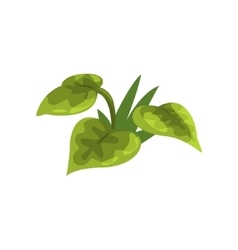 Wide leaf green pant isolated element of forest vector