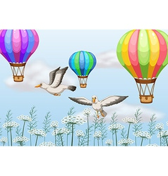 Birds and balloons vector image