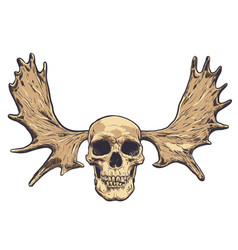 Hand drawn skull with deer horns on background vector