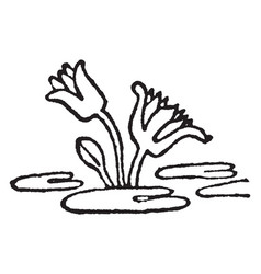 Lotus design is very much resembles our pond lily vector