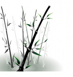 Vector bamboo in a pool vector