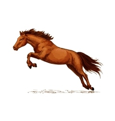 Landing or jumping horse at equine event sketch vector