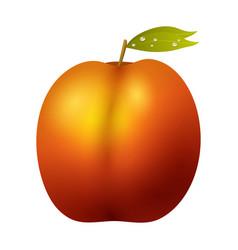 Peach fruit realistic 3d healthy vegetarian sweet vector