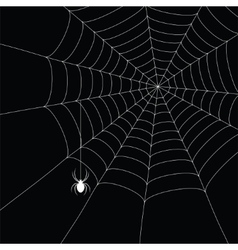 White spider and spider web vector