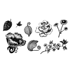 Collection of hand drawn ink flowers and leaves vector