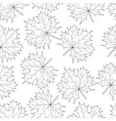 Seamless loop maple leaf on a white background vector image