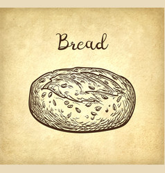Whole grain bread vector