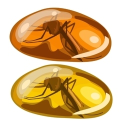 Ancient insect fly frozen in amber rare stone vector