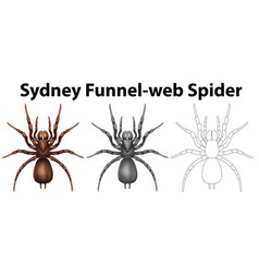 Doodle character for sydney funnel web spider vector