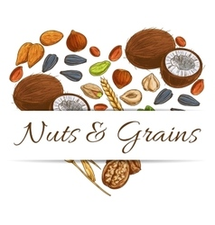 Heart made up of nut grain seed and bean vector