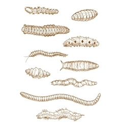 Caterpillars worms and larvae sketches vector