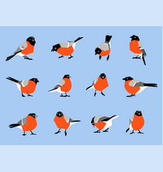Bullfinches isolated on white background vector