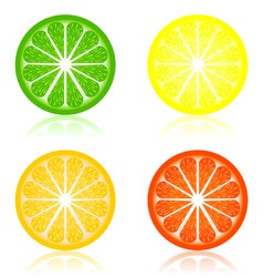 icon a citrus vector image