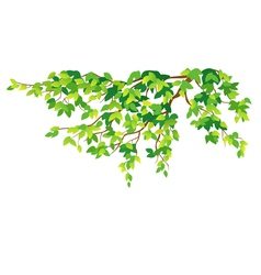 Green tree branch vector image
