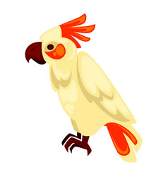 Parrot macaw with orange and beige feathers on vector