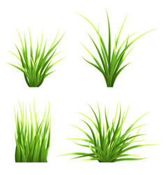 Set realictic grass vector